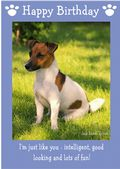 "Jack Russell Terrier-Happy Birthday - ""I'm Just Like You"" Theme"